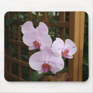 Zen orchids mouse mat