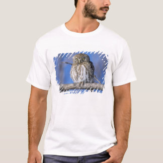 Zimbabwe. Close-up of pearl spotted owl on T-Shirt