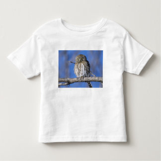 Zimbabwe. Close-up of pearl spotted owl on Toddler T-Shirt