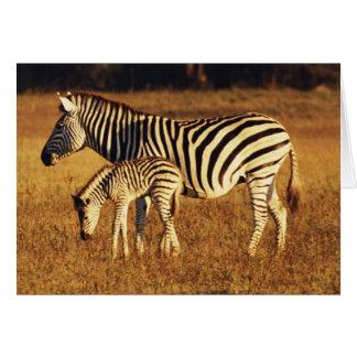 Zimbabwe, Hwange National Park, Linkwasha Card