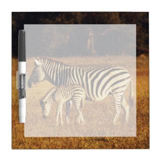 Zimbabwe, Hwange National Park, Linkwasha Dry Erase Board