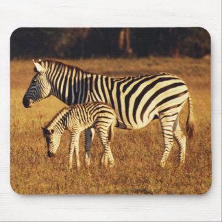 Zimbabwe, Hwange National Park, Linkwasha Mouse Mat