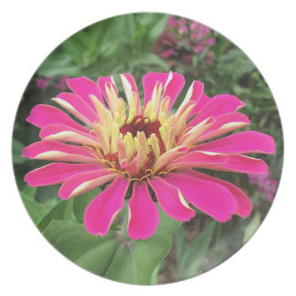 ZINNIA - Vibrant Pink and Cream - Plate