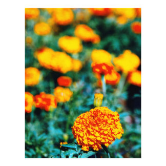 Zinnias garden flowers 21.5 cm x 28 cm flyer