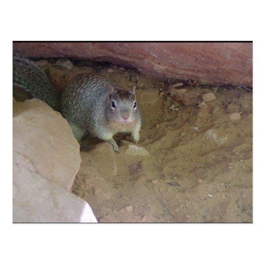 Zion National Park mascot Postcard