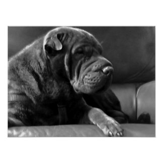 Zoey: Shar-Pei Dog Poster