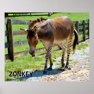Zonkey part Zebra and Donkey Poster