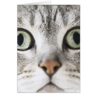 Zoom-up of cat face greeting card