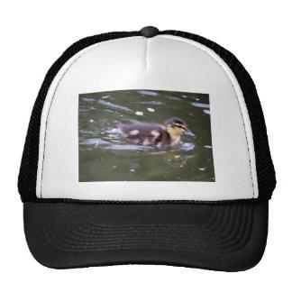 Zooming Duckling Mesh Hat