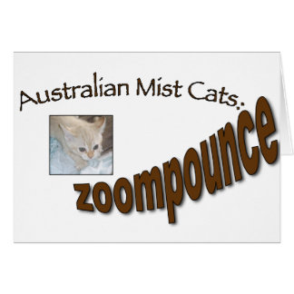 zoompounce kitten card