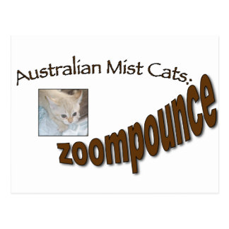 zoompounce kitten postcard