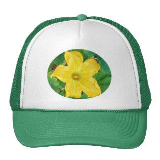 Zucchini Flower Hats