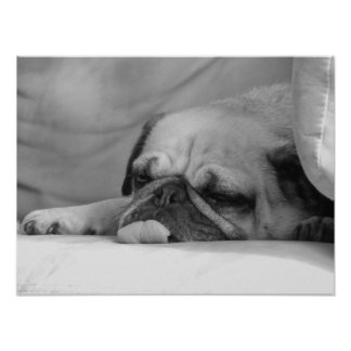 Zukie: Pug Dog Poster