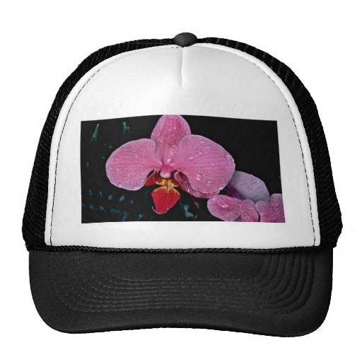 Zuma firefly  flowers mesh hats