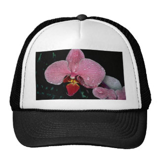 Zuma firefly trucker hat