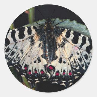 Zyerinthia polyxena, Olympia, Georgia, U.S.A. Round Stickers