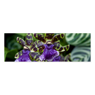 Zygopetalum Orchid • Bookmark / Business Card